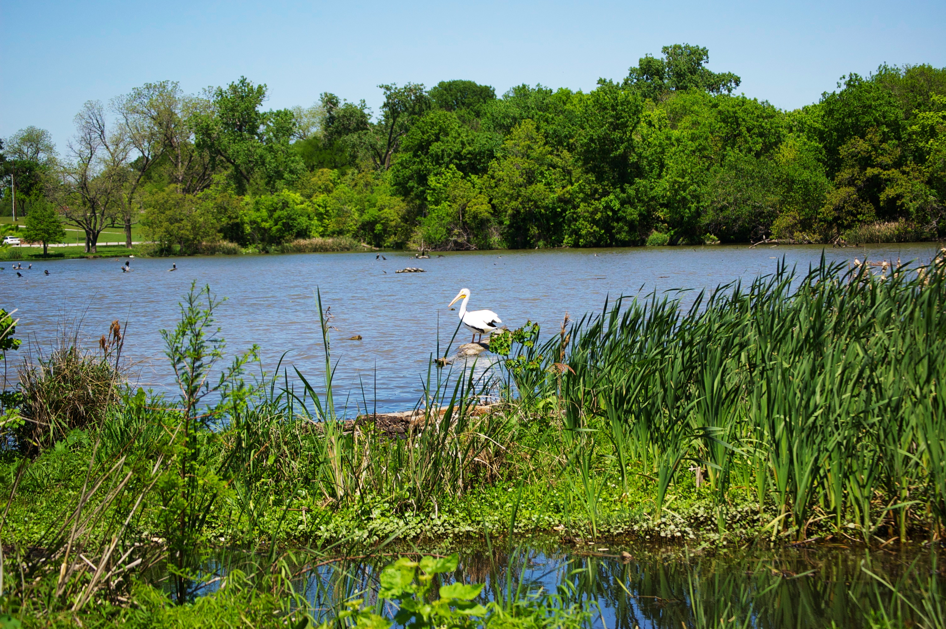 East Fork Reuse Wetland Nursery Created Natural Wildlife Habitat & Improved Water Quality